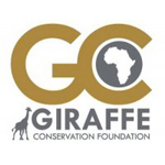 walking with giraffes